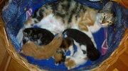Очаровательные котята ищут кошкин дом!