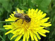 Пчелосемьи без посрдеников