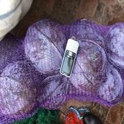 Лук фиолетовый оптом от 10т