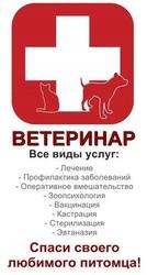 Срочный выезд ветеринарного врача на дом в Краснодаре